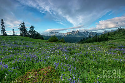 Soap Suds - Majestic Mountain Morning by Mike Dawson