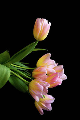 Photograph - Majestic Tulip Bouquet by Jennifer Wick