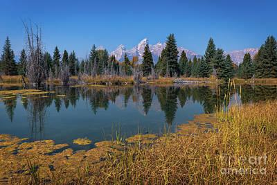Photograph - Majesty Of Teton National Park by Doug Sturgess