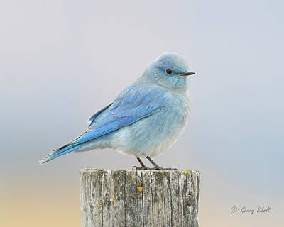 Photograph - Making Use Of A Fencepost by Gerry Sibell