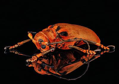 Photograph - Malaysian Longhorn Beetle by Gary Shepard