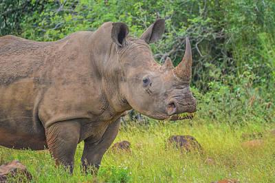 Crazy Cartoon Creatures - Male bull Cute White Rhino or Rhinoceros in a game reserve in So by Shams Faraz Amir