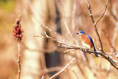 Photograph - Male Eastern Bluebird Painting by Carol Montoya