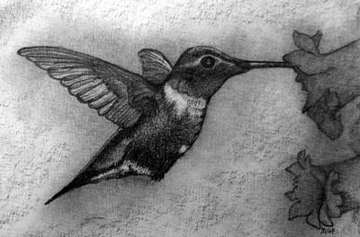 Drawings Royalty Free Images - Male Ruby-Throated Hummingbird Royalty-Free Image by Michael Panno