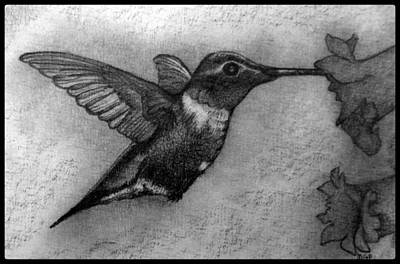 Animals Drawings - Male Ruby-Throated Hummingbird W/ Border by Michael Panno