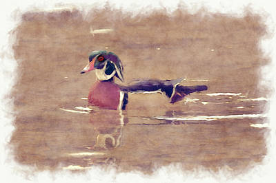 Photograph - Male Wood Duck      Paintography by Dan Friend