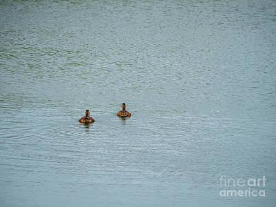 Photograph - Mallard Ducks by Jim Orr