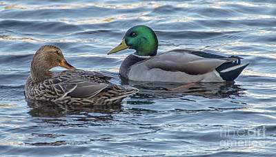 Photograph - Mallard Ducks On Their Southern Journey by Dale Powell