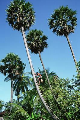 Photograph - Man Climbing  Tree by Tim Hall