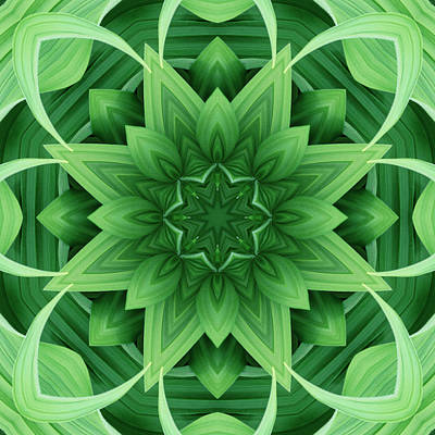 Symmetry Photograph - Mandala 1 by Steve Satushek