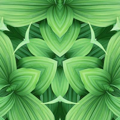 Symmetry Photograph - Mandala 3 by Steve Satushek