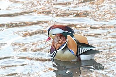 Photograph - Mandarin Duck 11 by Patricia Youngquist