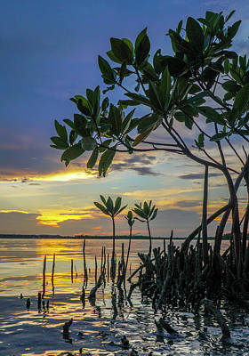 Bicycle Graphics - Mangrove sunset2 by Joey Waves
