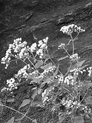 Photograph - Manhatan Schist Flora B W by Rob Hans