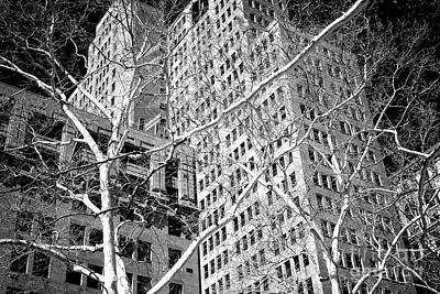 Photograph - Manhattan Winter Trees At City Hall Park by John Rizzuto