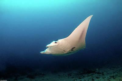 Giuseppe Cristiano - Manta Flight over Reef by Dan Norton