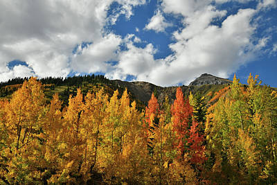 Photograph - Many Colored Aspens Along Million Dollar Highway by Ray Mathis