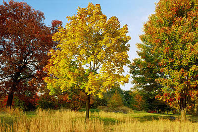 The Bronx Photograph - Maple Acer Trees In Autumn, Bronx, Ny by Richard Felber