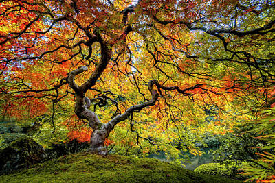 Photograph - Maple Fall Color In Oregon by Michael Ash