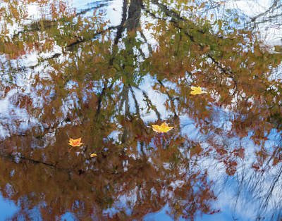 Photograph - Maple Reflections by Jean Noren