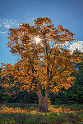 Photograph - Maple Tree In Full Autumn Glory by Rick Berk