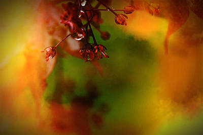 Animal Portraits - Maple Tree by Paul Gavin