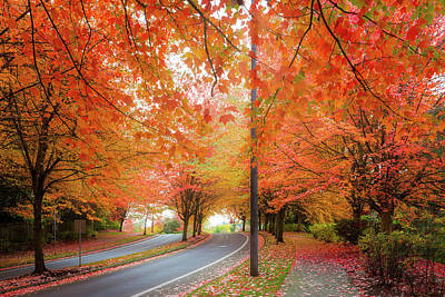 Wall Art - Photograph - Maple Trees Foliage Lined Street During Fall Season by David Gn