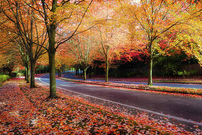 Wall Art - Photograph - Maple Trees Lined Street During Fall Season by David Gn