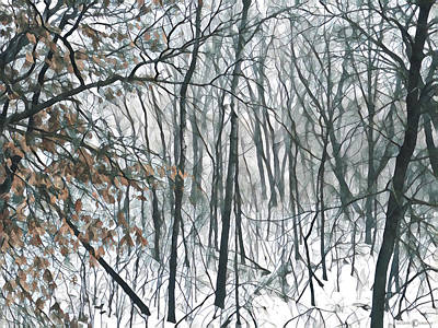 Photograph - March Woods by Tim Nyberg