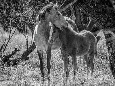 Photograph - Mare And Colt Bw By Tl Wilson Photography by Teresa Wilson