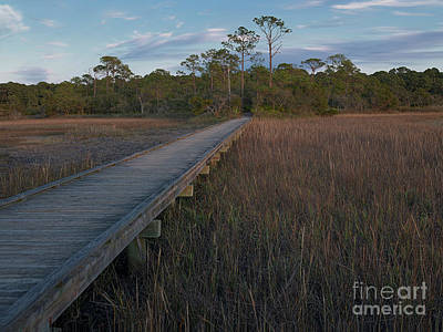 Photograph - Marsh Boardwalk by Patrick M Lynch