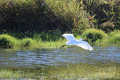 Photograph - Marsh Day With Great Egret by Carol Groenen