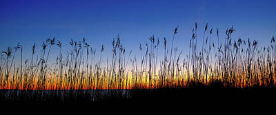 Photograph - Marsh Grass Silhouette  by Jeff Sinon