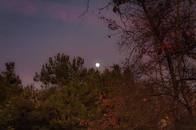 Photograph - Marvelous Moonrise by Alison Frank