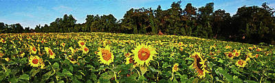 Painting - Maryland Sunflowers - 06 by Andrea Mazzocchetti