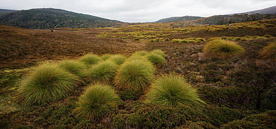 Photograph - Maryland Track In Cradle Mountain. by Rob D