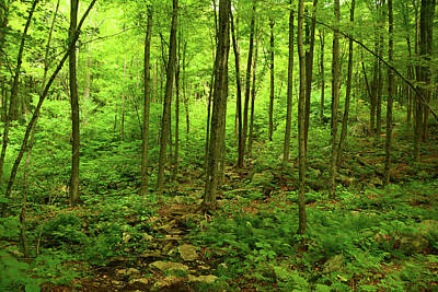 Photograph - Massachusetts Appalachian Trail Spring Green 2 by Raymond Salani III