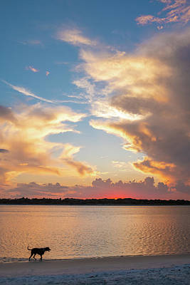 Photograph - Matanzas Inlet Sunset Dog Walk by Stacey Sather