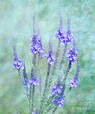Photograph - Mauve In The Mist by Elaine Manley