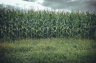 Photograph - Maze Field by Steve Stanger