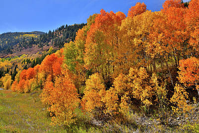 Photograph - Mcclure Pass Colorful Aspens by Ray Mathis