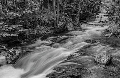 Photograph - Mckenzie River - Black And White by Loree Johnson