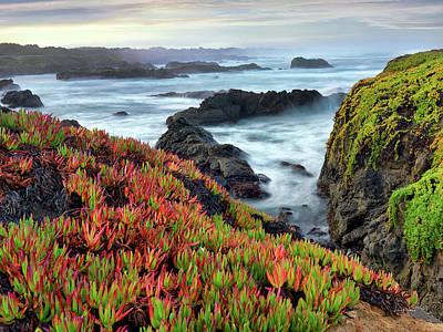 Photograph - Mckerricher State Park Color by Leland D Howard