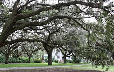 Photograph - Mcleod Plantation by Flavia Westerwelle