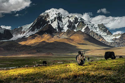 Yak Wall Art - Photograph - Meadow Field With Snow Mountain by Coolbiere Photograph