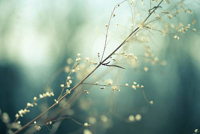 Photograph - Meadow by Jeja