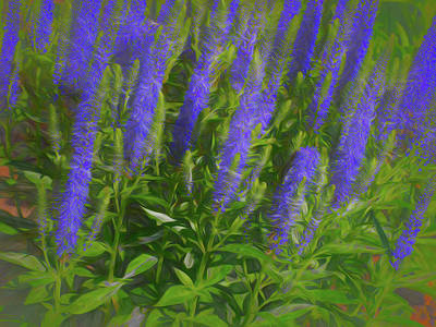 Digital Art - Meadow Sage Standing Tall by Leslie Montgomery