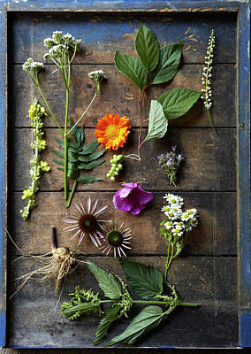Rockport Wall Art - Photograph - Medicinal Healing Herbs And Flowers by Susie Cushner