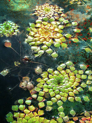 Photograph - Meditative Lily Pads by John Rivera
