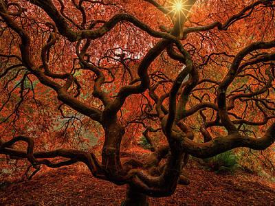 Photograph - Medusa by Dan Mihai